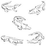 Crocodiles. Sketch pencil. Drawing by hand. Vector Stock Photo