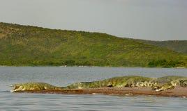 Crocodiles sunbathing at Lake Chamo royalty free stock photos
