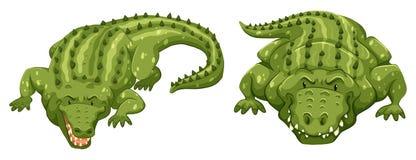 Crocodiles. Two green crocodiles on white background Royalty Free Stock Photo