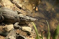 The Crocodiles at Vidanta Riviera Maya. Mexico stock photography