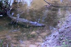 The Crocodiles at Vidanta Riviera Maya Stock Images
