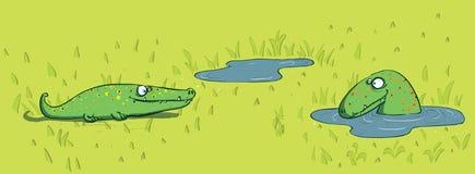Crocodiles and Water Stock Photo