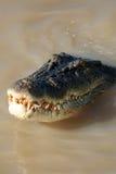 Crocodille bij Kakadu Nationaal Park, Australië Stock Afbeeldingen