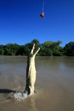 Crocodille di salto, Kakadu, Australia Fotografie Stock Libere da Diritti