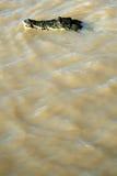 Crocodille, Kakadu, Australië Royalty-vrije Stock Fotografie