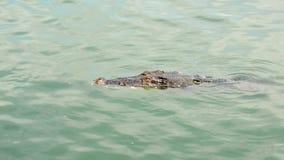 crocodilo video estoque
