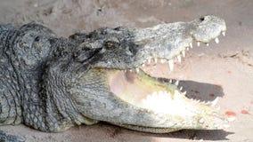crocodilo vídeos de arquivo