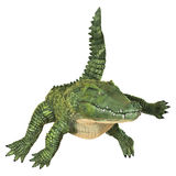 crocodilo Foto de Stock Royalty Free