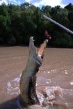 Crocodilo Imagem de Stock Royalty Free