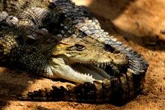 Crocodilo com a boca largamente aberta fotografia de stock