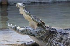 Crocodilo com dinheiro em sua boca, Tailândia fotos de stock royalty free