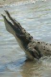 Crocodilo no rio de Tarcoles Fotos de Stock Royalty Free