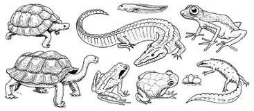 Crocodilo e tartaruga Répteis e anfíbios ajustados Animal de estimação e animais tropicais Animais selvagens e rãs, lagarto e tar ilustração royalty free