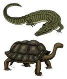 Crocodilo e tartaruga Répteis e animal de estimação dos anfíbios e animal tropical mão gravada tirada no esboço velho do vintage  ilustração do vetor