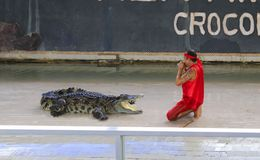 Crocodilo grande da Editorial-mostra no assoalho no jardim zoológico fotografia de stock royalty free