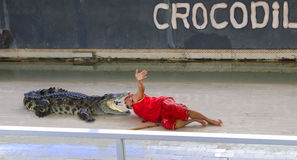 Crocodilo grande da mostra de Editorial-1st no assoalho no jardim zoológico Fotos de Stock Royalty Free