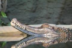 Crocodilo na água foto de stock royalty free