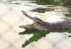 Crocodilo pboquiaberto Disparado na exploração agrícola e no jardim zoológico do crocodilo de Samut Prakan Imagem de Stock