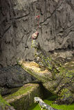 Crocodilo que alimenta, crocodilo que come um peixe imagem de stock royalty free