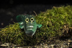 Crocodilo verde do brinquedo Fotografia de Stock