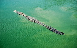Crocodilos os animais os mais ferozes 2 foto de stock