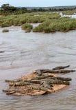 Crocodilos que tomam sol no Sun no parque nacional de Kruger Foto de Stock