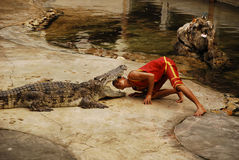 Crocodylidae or crocodile show royalty free stock image