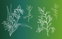 Crocosmia-Blume in der Blüte Lizenzfreie Stockbilder