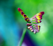 Crocosmia flower. Coming up out blurry background royalty free stock images
