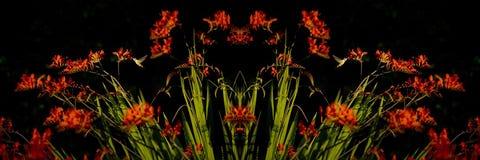 Crocosmia met Zoemende Vogels bij Zonsondergang Royalty-vrije Stock Afbeelding