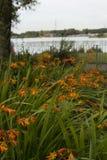 Crocosmia y x28 anaranjados hermosos; Columbus& x29; flores Fotografía de archivo libre de regalías