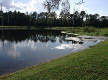 Crocs n鳄鱼的沼泽的家 免版税库存照片
