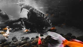 Crocs u. x27; n-Fische stockbilder