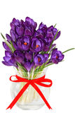 Crocus. Purple crocus flower in the vase isolated on white Royalty Free Stock Photos