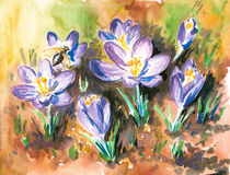Crocus. First violet crocus on the sun .Picture i have painted by myself with watercolor Royalty Free Stock Photography