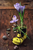 Crocus in astylish yellow shoe Stock Photos