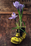 Crocus in astylish yellow shoe Stock Images