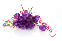 Crocus Bouquet. Crocus flower bouquet with red ribbon isolated on white Royalty Free Stock Photography