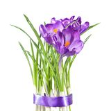 Crocus bouquet Royalty Free Stock Image
