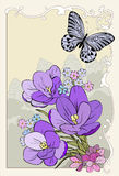 Crocus bouquet with butterfly Royalty Free Stock Images