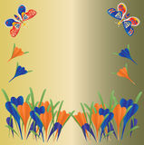 Crocus and Butterflies Background Royalty Free Stock Photos