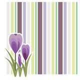 Crocus design Stock Images