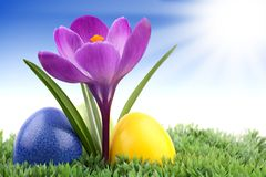 Crocus with easter eggs 2 Royalty Free Stock Photos