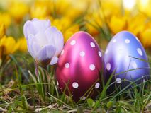 Crocus with easter eggs on meadow Royalty Free Stock Image