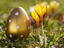 Crocus with easter eggs on meadow Stock Images