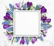 Crocus flower and blank card Stock Image