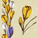 Crocus flower and seamless floral border Royalty Free Stock Photography