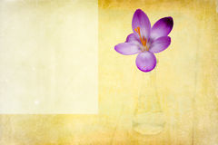 Crocus flower with artistic background Stock Photography