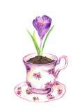Crocus flower in tea cup. Watercolor Stock Photography