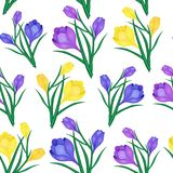 Crocus flowers-01. Beautiful spring seamless pattern with Yellow,blue crocuses.The flowers of saffron on a white background.Vector illustration.Print for gift Royalty Free Stock Photo